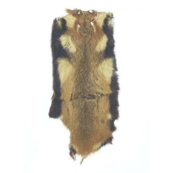 Savannah rat