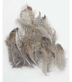 Gray partridge natural