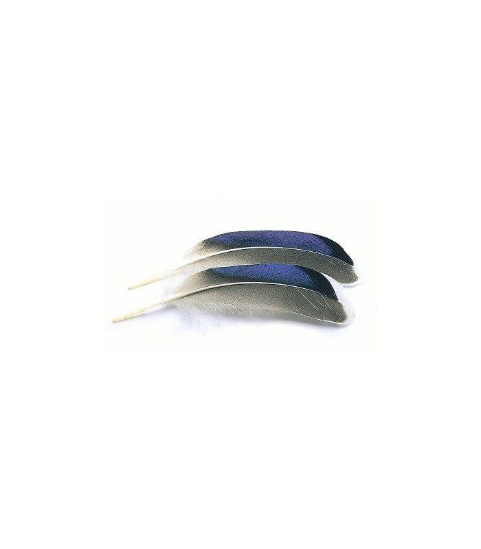 Mallard duck wing quills blue/white tip