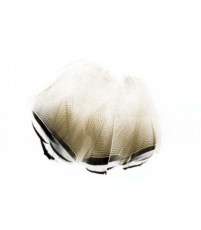 Wood duck black and white flank feathers