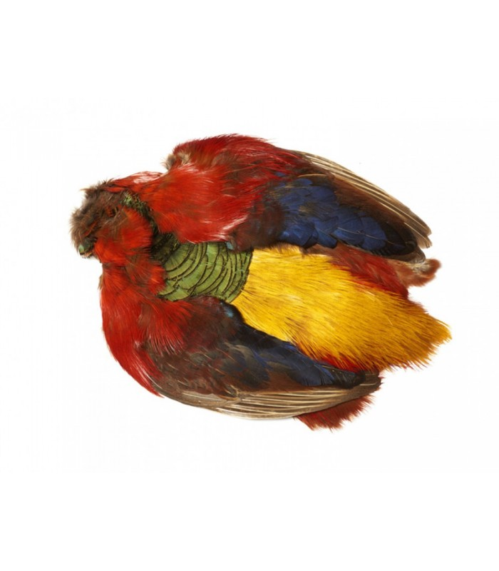 Golden pheasant body skin