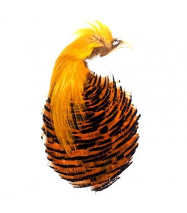 Golden pheasant complete head natural No.1