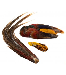 Golden pheasant complete skin w/tail and head
