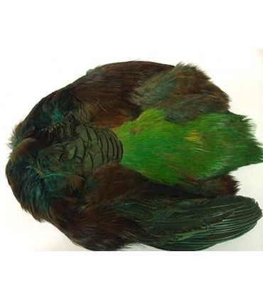 Golden pheasant body skin dyed highlander green