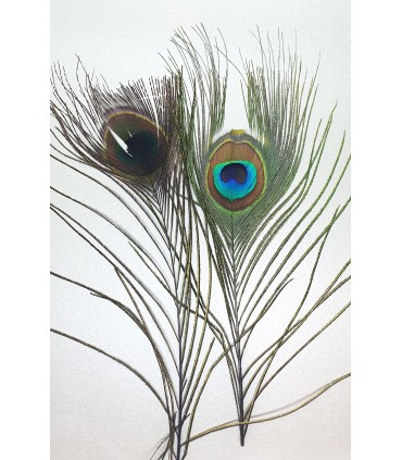 Peacock eye tops