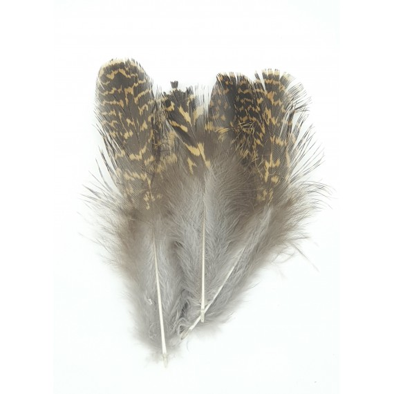 Grouse body plumage - Veniard