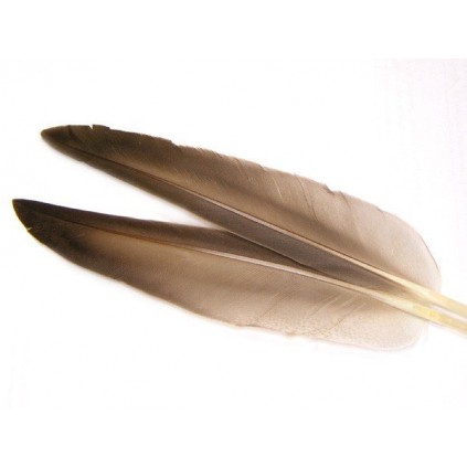 Mallard duck wing quills gray - Veniard