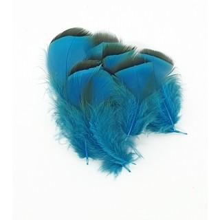 French Partridge - Veniard