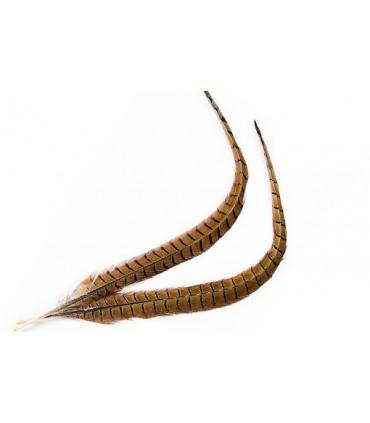 Cock pheasant centre tail