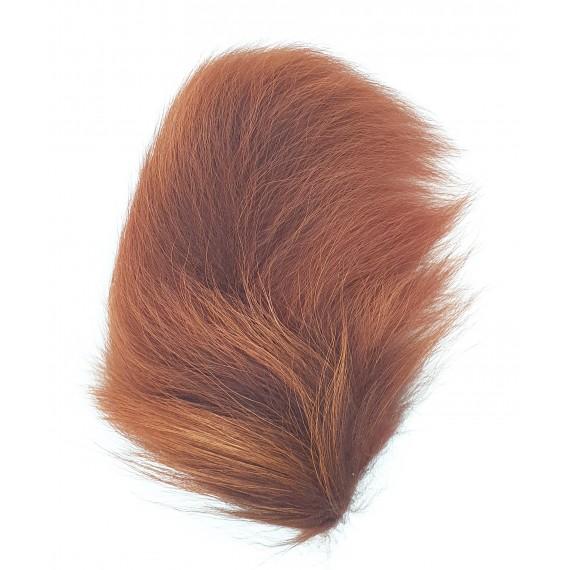 Horn's Raccoon tail